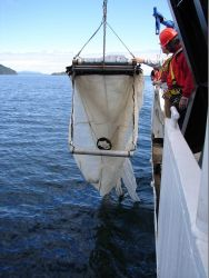Recovering a MOCNESS off the NOAA Ship FAIRWEATHER. Photo