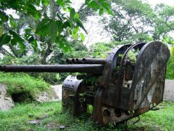 A remnant of World War II - deserted Japanese anti-aircraft gun being overtaken by the climate and relentless growth of tropical foliage. Photo