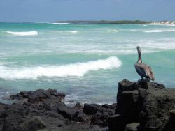 A pelican in paradise. Photo