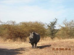 White rhinoceros at the Bandia Game Preserve Photo