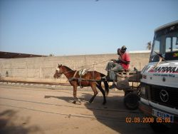 Horse-carts compete with modern trucks on the outskirts of Dakar. Photo