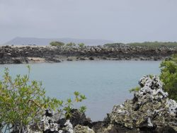 With volcanoes in the background, the green mangroves, blue waters, black aa and white lichen makes for a very picturesque lagoon at Las Tintoreras. Photo