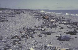 The beach at Nome Photo