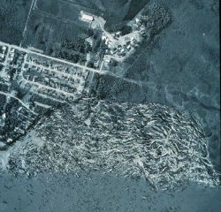 Aerial view of Turnagain Arms, Alaska after 1963 Good Friday Earthquake Image