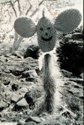 A happy face cactus in the Galapagos Islands Image