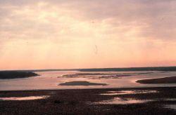 A swampy shoreline at dusk Image