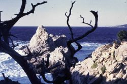 Point Lobos State Reserve Photo