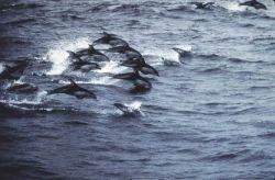 Dolphin. Photo
