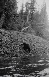 Black bear at triangulation station Patsy. Photo