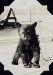 Black bear cub on the SURVEYOR Photo