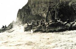 Sea lions (Eumetopias jubatus) at the east end of Amlia Island. Photo