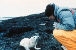 Seaman from PEIRCE making friends with a newborn harbor seal. Photo