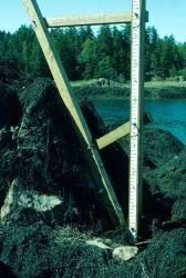 A closeup of the upper tide staff of the two overlapping staffs in the previous picture. Photo