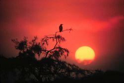 Sunrise over the Everglades Photo