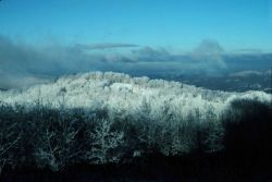 Snow and rime ice covering the Smokies Photo