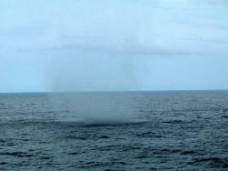 Waterspout observed from NOAA Ship RONALD H Photo