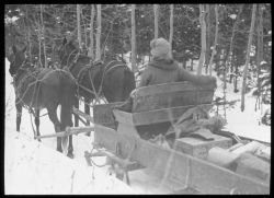 A horse pulling a sleigh to the end of the road on the way to the Weather Bureau /Forest Service cooperative site outside of Ephriam, Utah, for snow o Photo