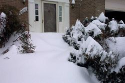 Shrubs covered by snow drifts. Photo