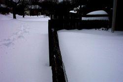 Snow! Photo