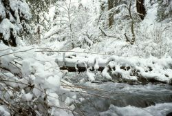 North Fork of the Little Butte Creek Photo