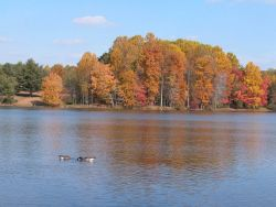 Canada geese and fall colors. Photo