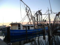 Still floating shrimp boat that will take some work to get back in order. Photo