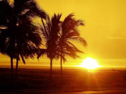 Sunset with palm trees. Photo