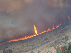 During an afternoon of extreme fire behavior, a firewhirl is observed along the flaming front Photo