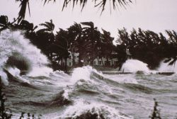 Tropical storm waves batter a palm-tree graced shoreline. Photo