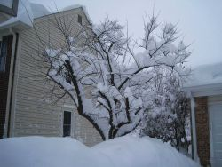Snow buildup on tree Photo