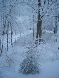 A winter wonderland of snow, trees, and a frozen pond just prior to the two great snowstorms of February 2010 Image
