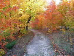 Fall foliage gracing a wooded path Photo
