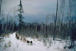 Sled dog race, north shore Lake Superior Photo