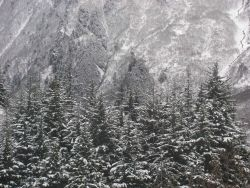 Snow, trees, and mountains. Photo