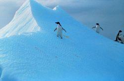 Penguins explore snow-dunes in Antarctica Photo