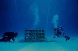 Experimental reefs, or casitas, help determine what factors make the best reefs. Photo