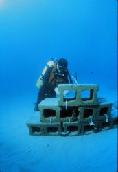 Artificial reefs can increase productivity of sandy bottoms. Image