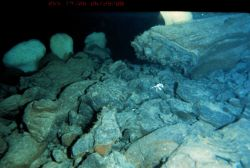 Sponges and crab on a basalt talus slope. Photo
