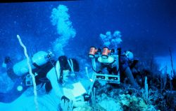 Stereo photography allows diver scientists to measure the size of corals. Photo