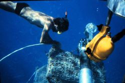 Snorkeler retrieves ghost traps from the grip of a submersible. Photo