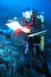 Diver conducts point counts of reef fish. Photo