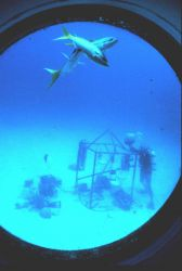 Aquanauts deploy experiment outside HYDROLAB. Image