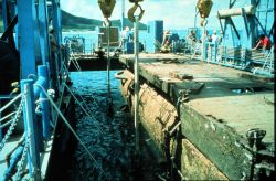 AQUARIUS breaks the surface during 1990 recovery from Salt R Image