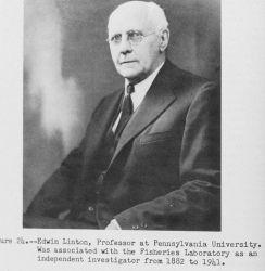 Edwin Linton, Professor at Pennsylvania University Photo