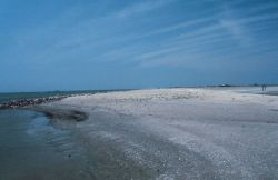 A view from the southeastern part of the restoration area where erosion was a concern. Image