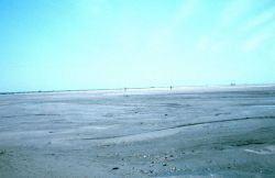 A view of a wide expanse of newly created marsh platform. Photo