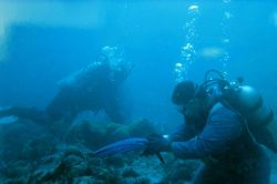 A diver replaces gear before continuing to work. Photo
