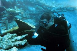 A diver prepares to reattach an Elkhorn coral fragment. Photo