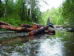 An excavator places logs in the stream to create a log jam. Photo