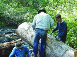 Skagit Fisheries Enhancement members secure the logs with cable. Photo